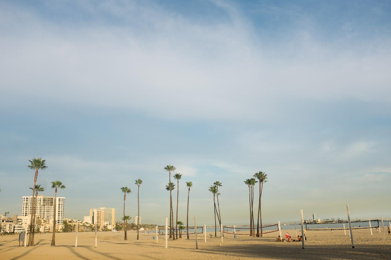 Palm trees in Long Beach, CA